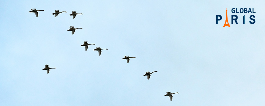 aves-migratorias-y-contaminacion-como-afecta--Global-Paris